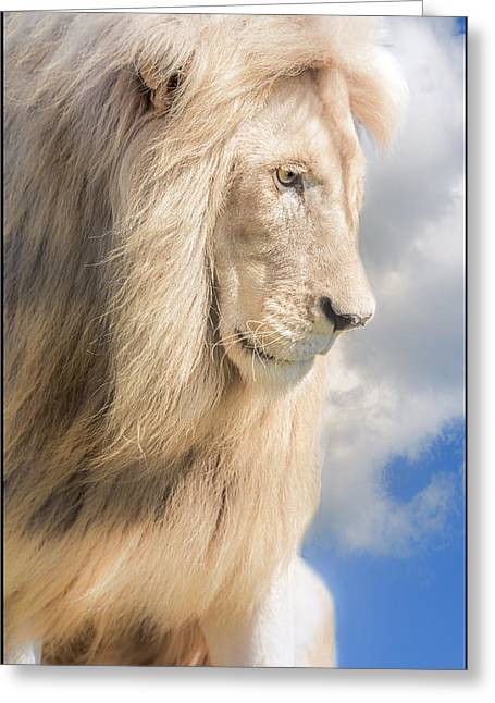 Male Lion Dreams Greeting Card