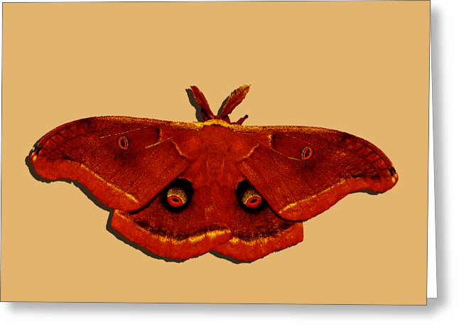 Greeting Card featuring the photograph Male Moth Red .png by Al Powell Photography USA