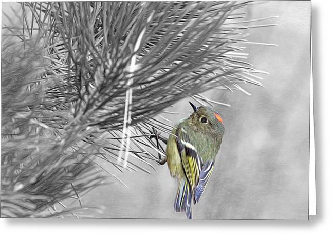 Male Ruby-crowned Kinglet Greeting Card