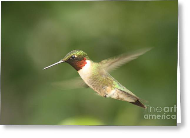 Male Ruby Throated Hummingbird Greeting Card by Cathy  Beharriell