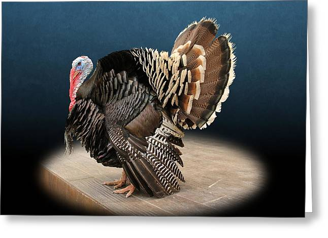 Male Turkey Strutting Greeting Card