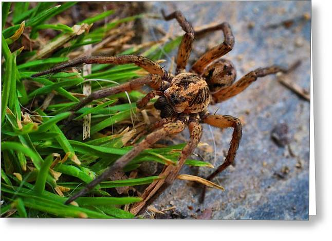 Male Wolf Spider Greeting Card by Kathryn Meyer