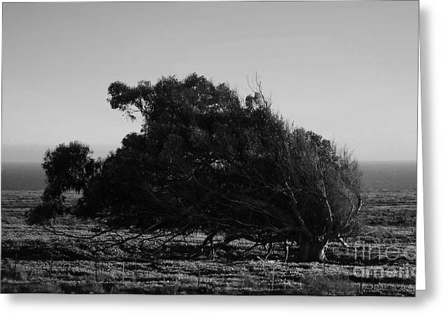 Greeting Card featuring the photograph Malformed Treeline by Clayton Bruster
