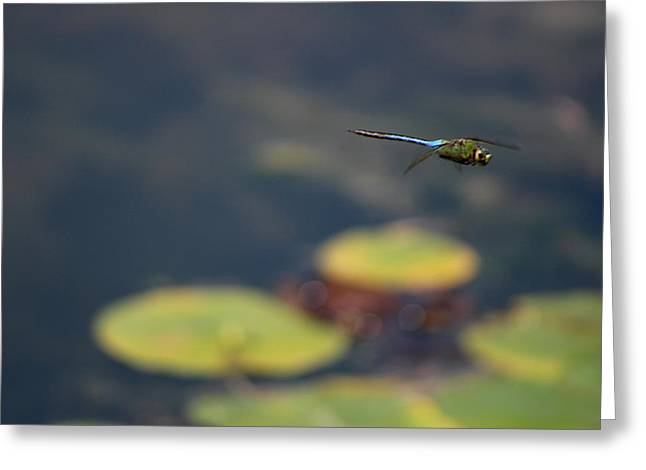 Malibu Blue Dragonfly Flying Over Lotus Pond Greeting Card