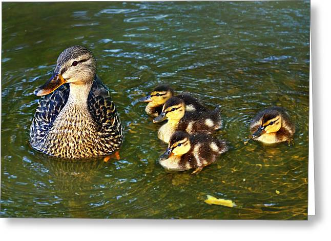 Mallard And Ducklings Greeting Card by Susan Leggett
