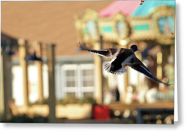 Mallard Duck And Carousel Greeting Card by Geraldine Scull