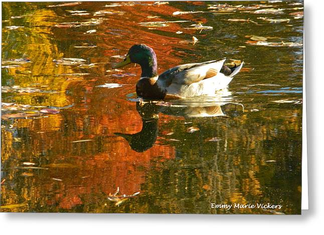 Mallard Duck In The Fall Greeting Card