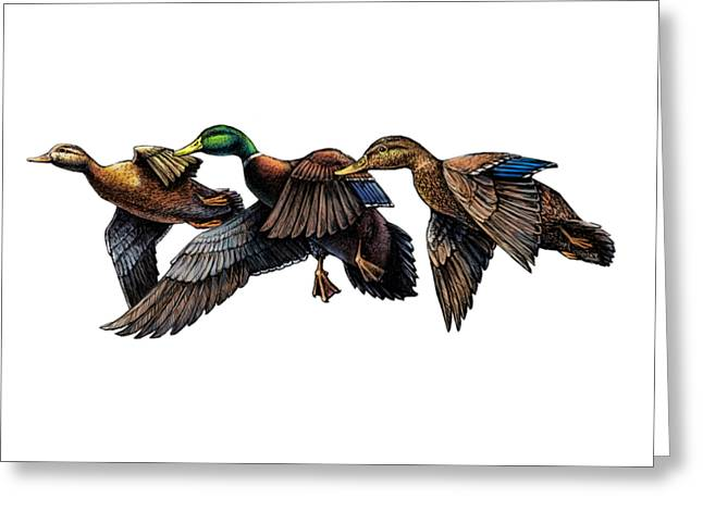 Mallard Ducks In Flight Greeting Card