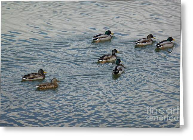 Mallard Ducks In Pond 2 Greeting Card by Jean Bernard Roussilhe