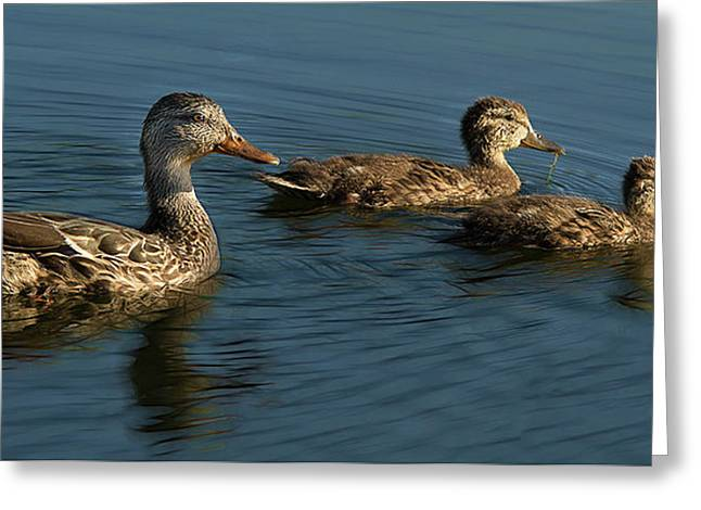 Greeting Card featuring the photograph Mallard Family Outing by Jean Noren