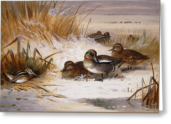 Mallard Widgeon And Snipe At The Edge Of A Pool In Winter Greeting Card by Archibald Thorburn