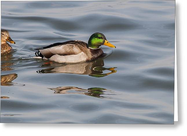 Mallards And Reflection Greeting Card