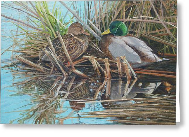 Mallards At Rithet's Bog Greeting Card