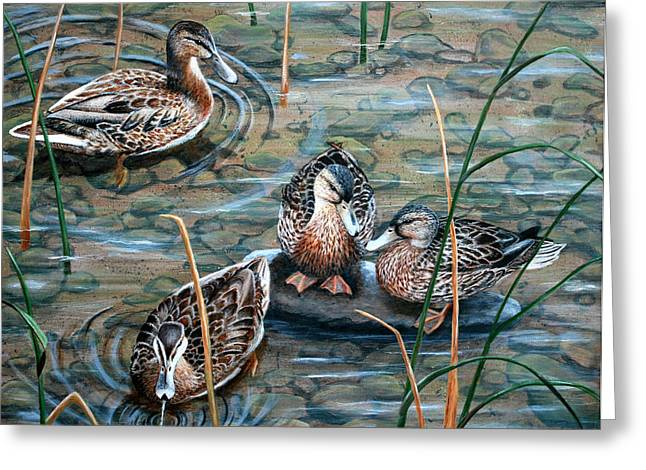 Mallards Greeting Card by Brenda Baker