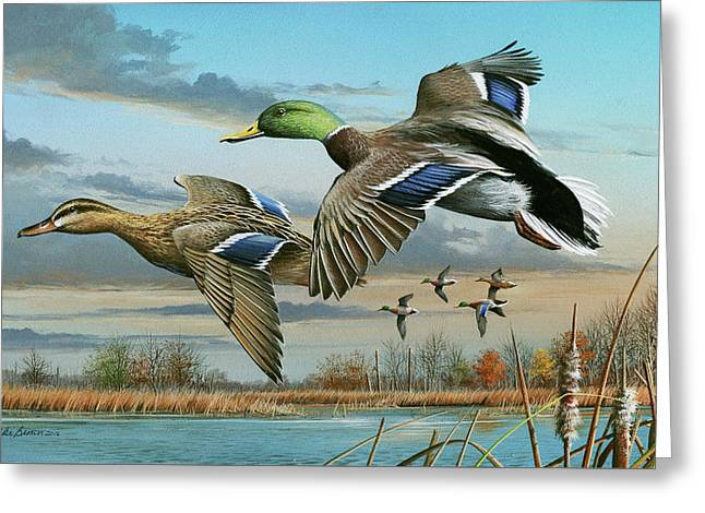 Mallards In Flight Greeting Card