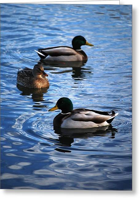 Mallards Greeting Card by Peter  McIntosh