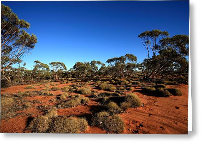 Mallee And Spinifex Greeting Card by Tony Brown