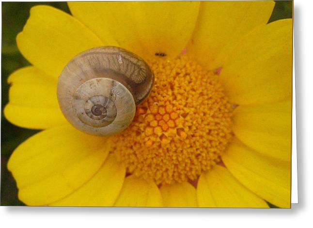 Malta Flower Greeting Card