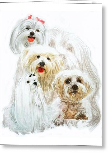 Maltese W/ghost Greeting Card by Barbara Keith