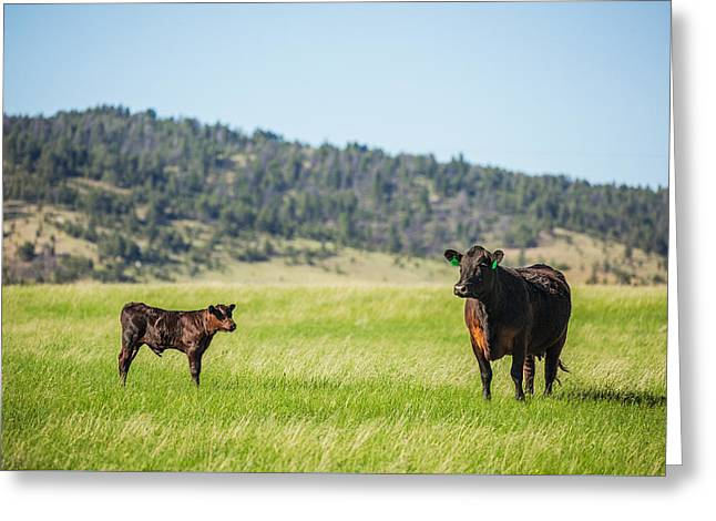 Mama And Her Calf Greeting Card by Todd Klassy
