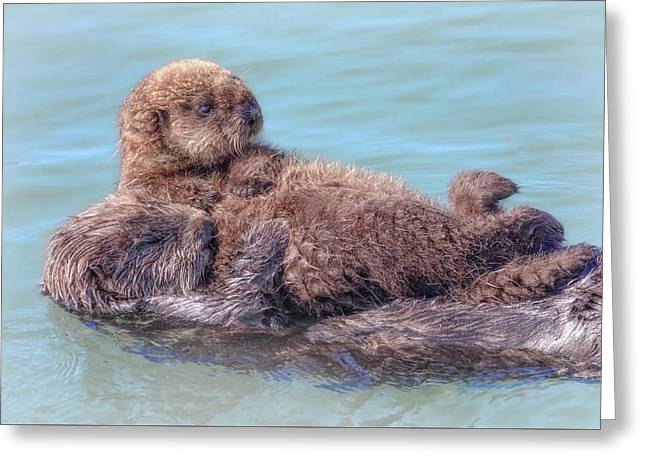 Mama Is My Raft Of Love Greeting Card by Leslie Reagan - Joy To The Wild Photos
