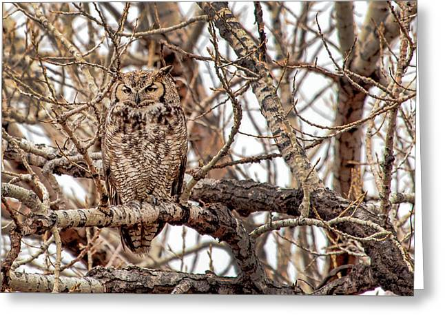 Mama Owl In Camo Greeting Card