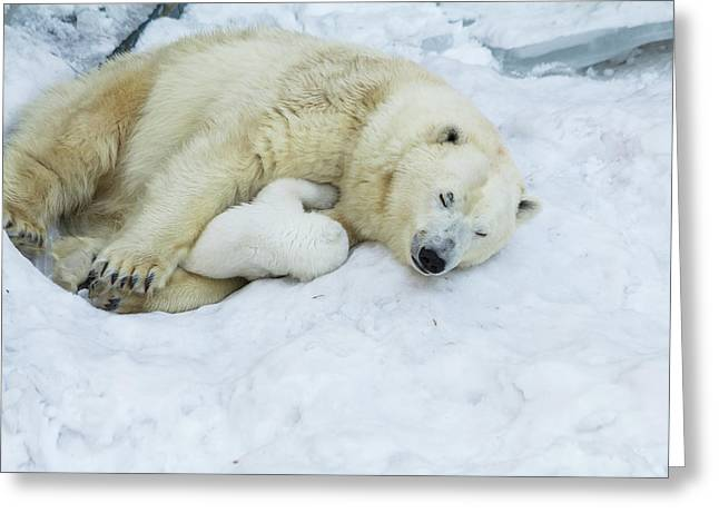 Mama Polar Bear With Her Child. Greeting Card by Andrey Tsvirenko