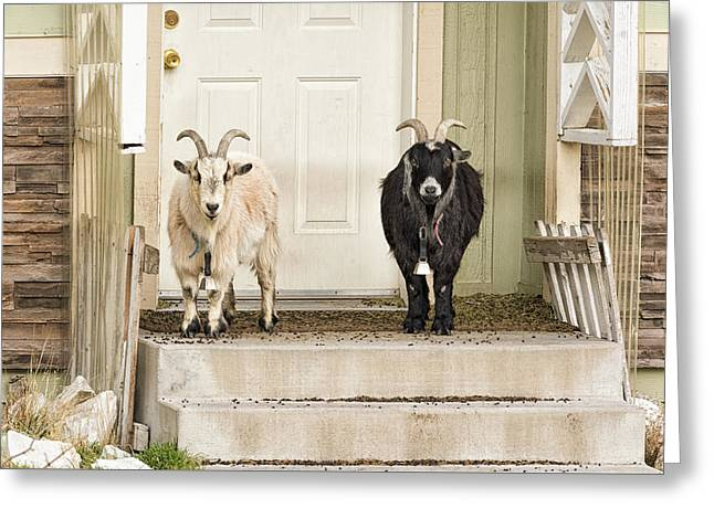 The Goat Guard Greeting Card