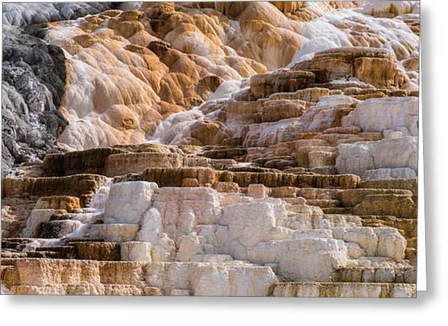 Mammoth Hot Springs Terraces Yellowstone Greeting Card by Steve Gadomski