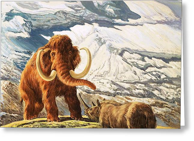 Mammoth Meets Rhinoceros Greeting Card by Eric Tansley