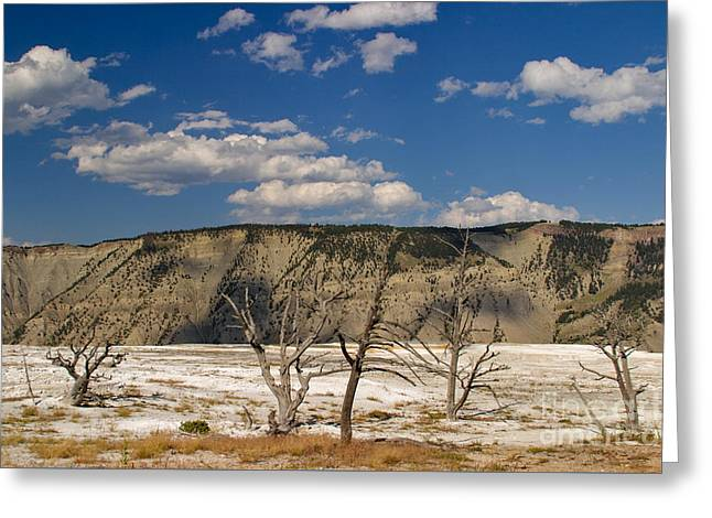 Mammoth Springs Sentinels Greeting Card by Charles Kozierok