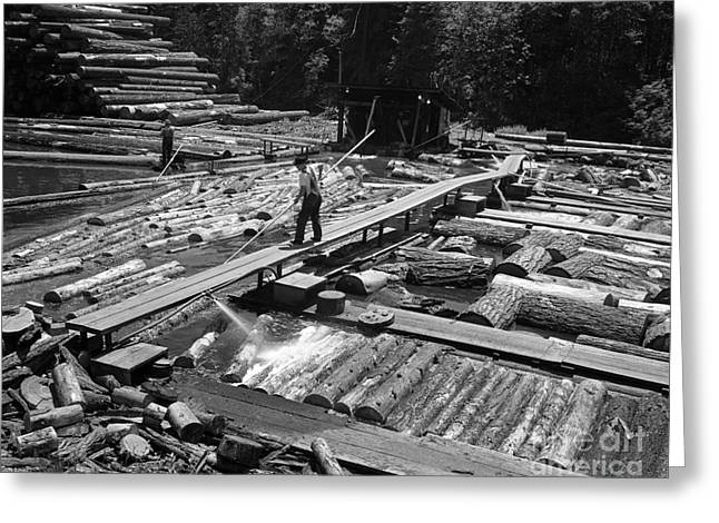 Man Pushing Logs In Lumber Mill Pond Greeting Card by H. Armstrong Roberts/ClassicStock