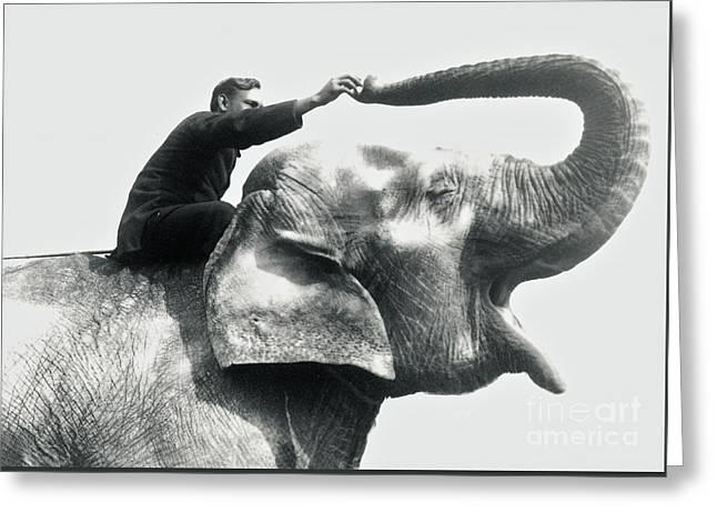Man Riding An Elephant  Greeting Card