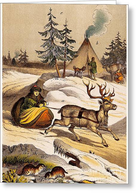 Man Riding Reindeer-drawn Sleigh Greeting Card by Wellcome Images