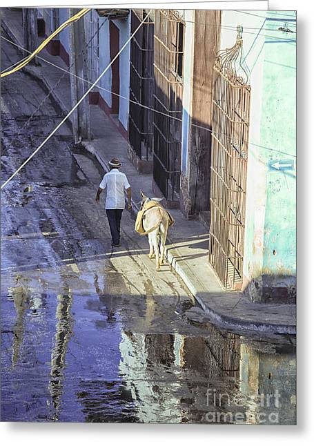 Man With Donkey On Street Cuba Greeting Card by Patricia Hofmeester