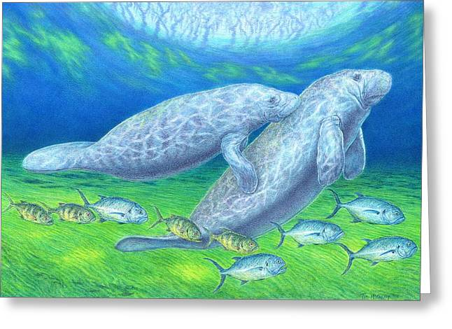 Manatee Spring Greeting Card by Tim McCarthy