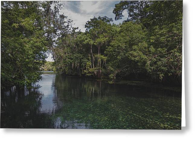 Manatee Springs Greeting Card