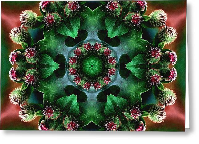 Mandala Bull Thistle Greeting Card