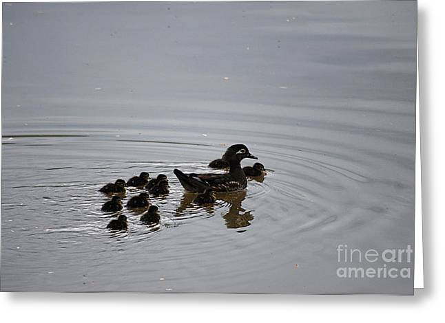 Mandarin Duck And Babes 20130508_227 Greeting Card