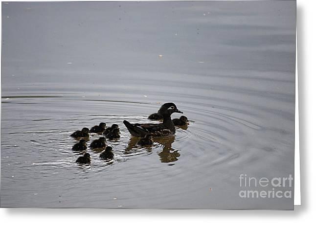 Mandarin Duck And Babes 20130508_227 Greeting Card by Tina Hopkins