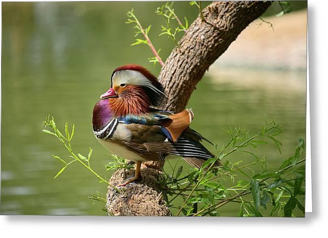 Mandarin Duck On Tree Greeting Card