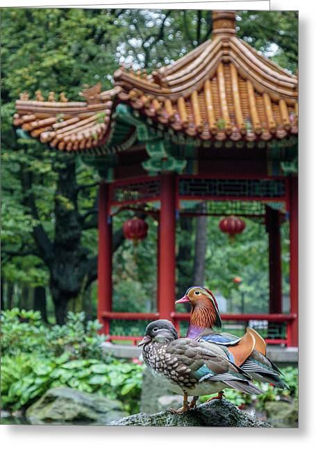 Mandarin Ducks At Pavilion Greeting Card