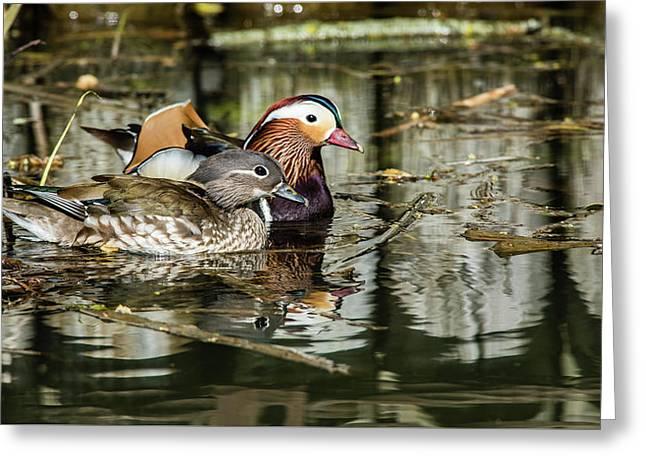 Mandarin Ducks The Couple Greeting Card by Torbjorn Swenelius