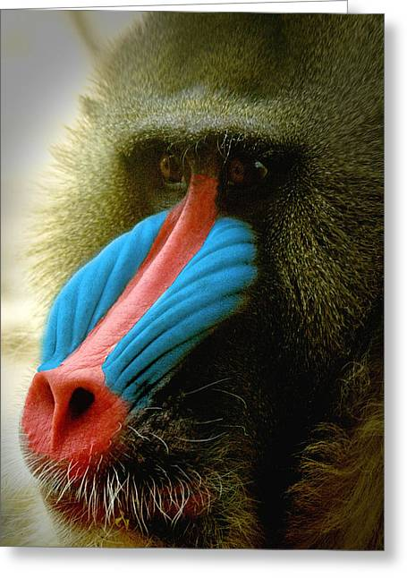 Mandrill Greeting Card by Richard Henne