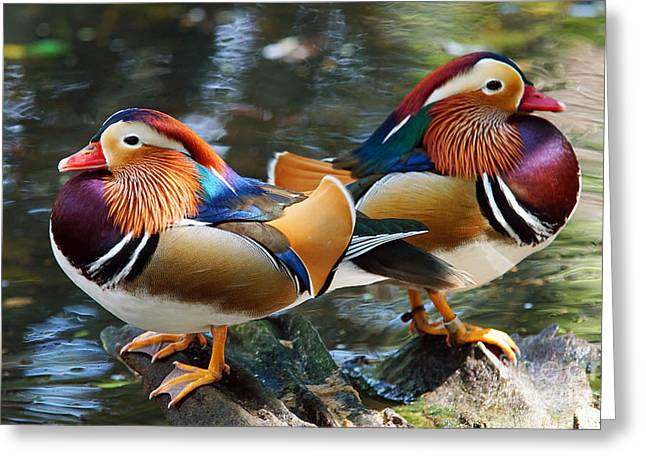 Mandarin Double Shot Greeting Card