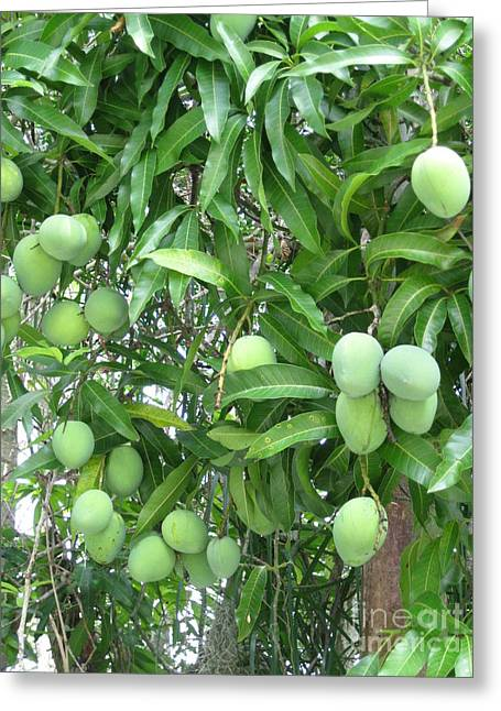 Mango Tree. Home Collection Greeting Card