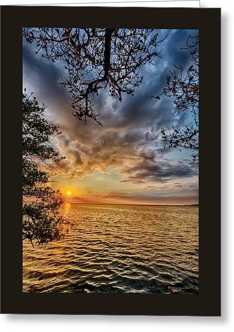 Mangrove Embrace Greeting Card