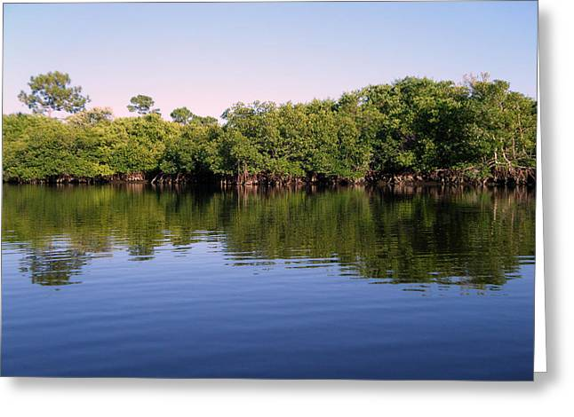 Mangrove Forest Greeting Card by Steven Scott