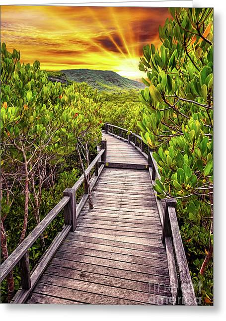 Mangrove Forest Sunset Greeting Card