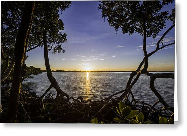 Mangrove Frame Greeting Card